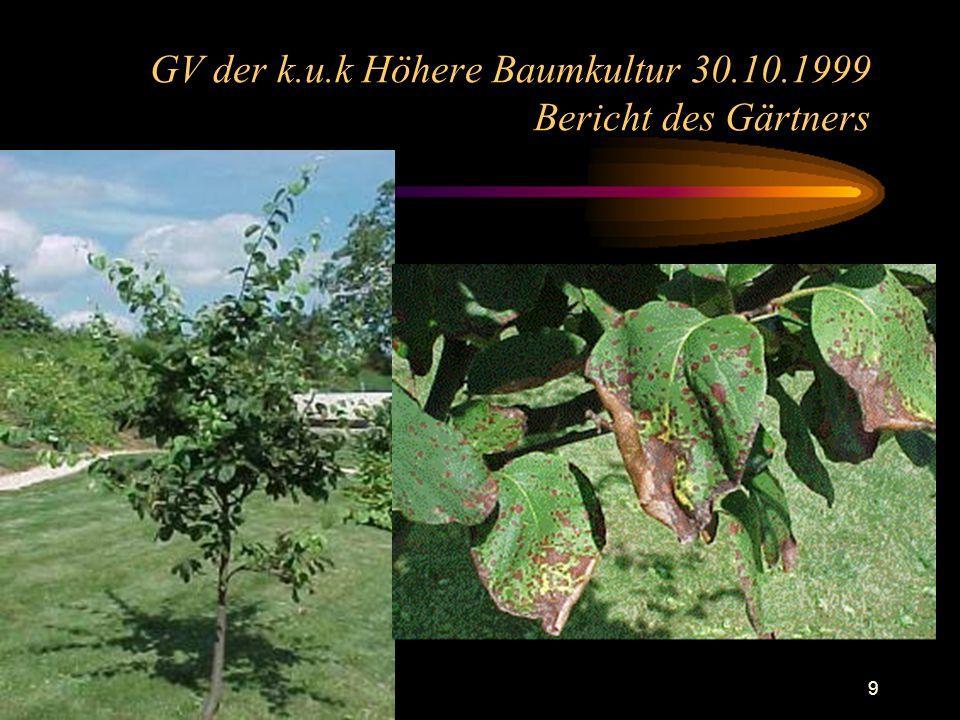 10 GV der k.u.k Höhere Baumkultur 30.10.1999 Bericht des Gärtners