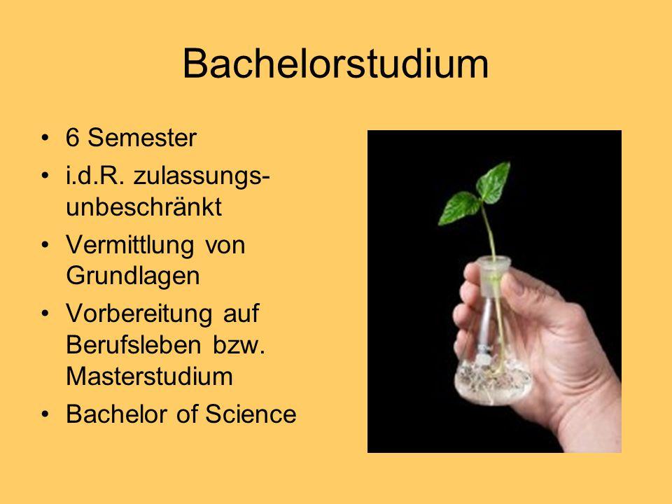 Bachelorstudium 6 Semester i.d.R. zulassungs- unbeschränkt Vermittlung von Grundlagen Vorbereitung auf Berufsleben bzw. Masterstudium Bachelor of Scie