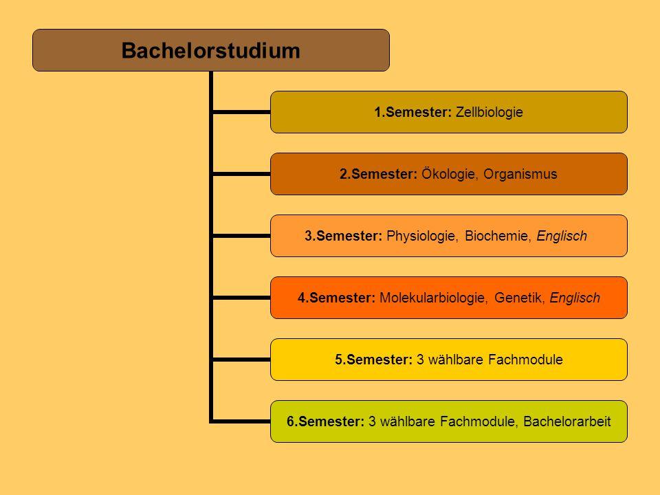 Bachelorstudium 1.Semester: Zellbiologie 2.Semester: Ökologie, Organismus 3.Semester: Physiologie, Biochemie, Englisch 4.Semester: Molekularbiologie,