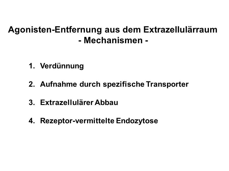 Agonisten-Entfernung aus dem Extrazellulärraum - Mechanismen - 1.Verdünnung 2.Aufnahme durch spezifische Transporter 3.Extrazellulärer Abbau 4.Rezepto