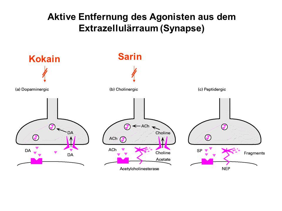 Aktive Entfernung des Agonisten aus dem Extrazellulärraum (Synapse) Kokain Sarin