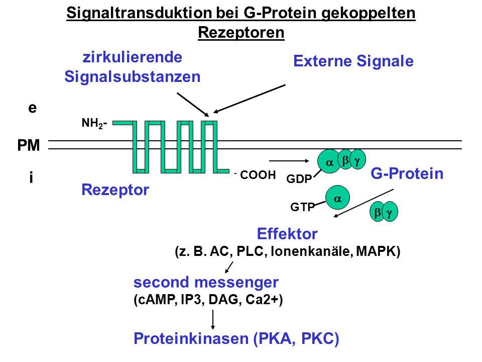 Signaltransduktion bei G-Protein gekoppelten Rezeptoren e i PM zirkulierende Signalsubstanzen NH 2 - - COOH   G-Protein Rezeptor Effektor (z. B. AC