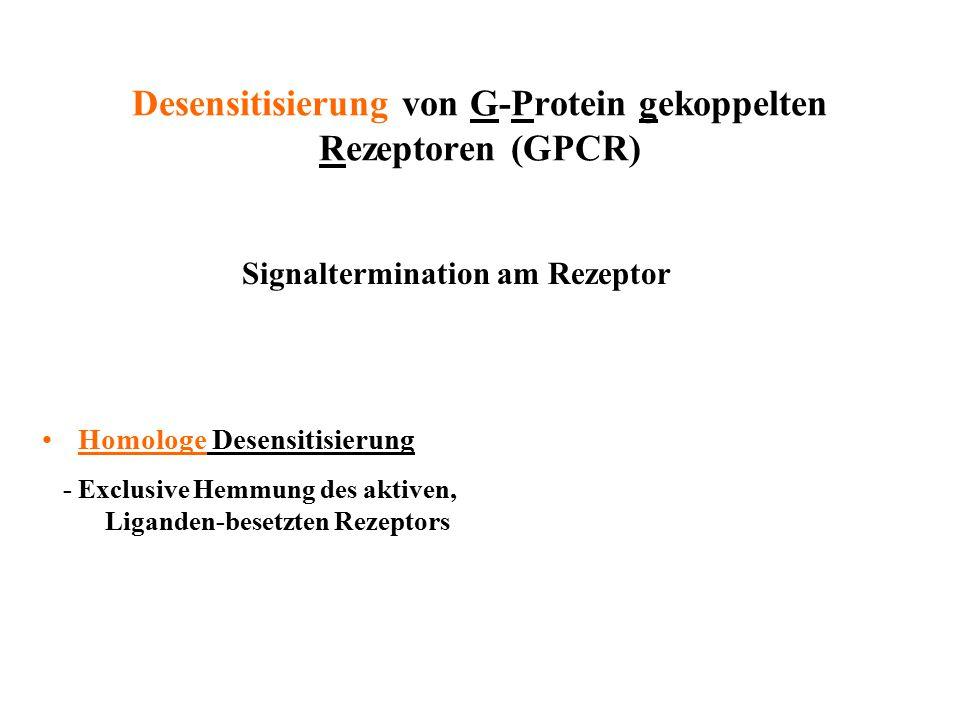 Desensitisierung von G-Protein gekoppelten Rezeptoren (GPCR) Homologe Desensitisierung - Exclusive Hemmung des aktiven, Liganden-besetzten Rezeptors S