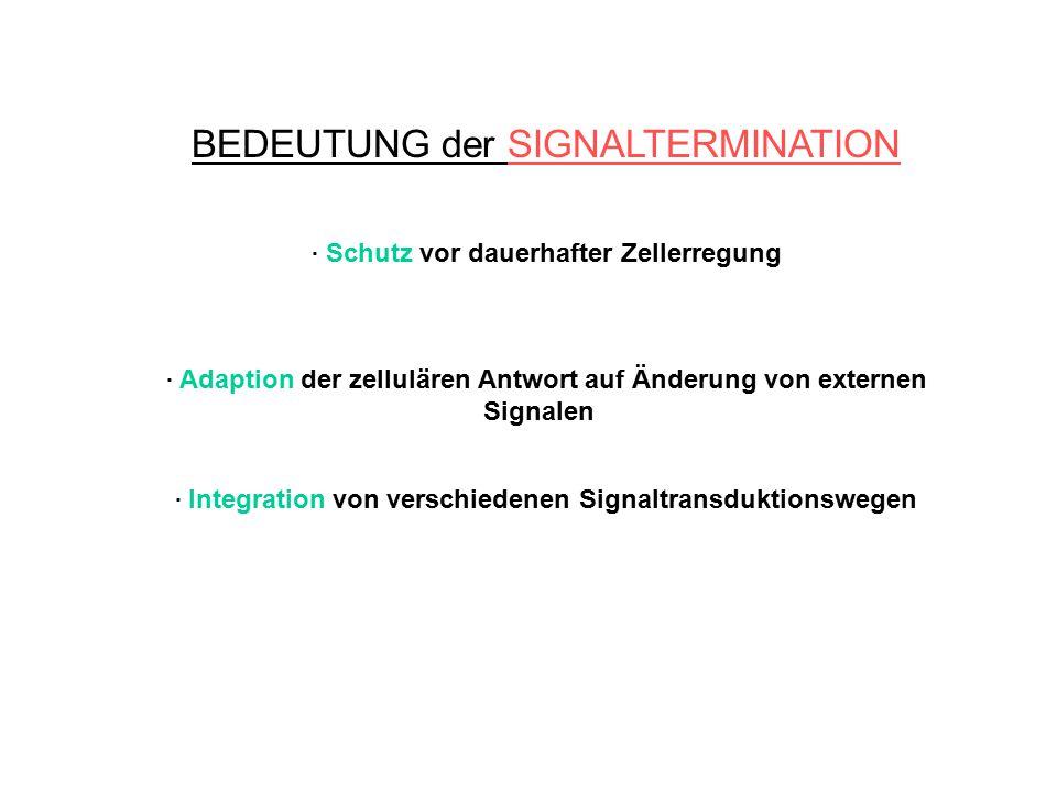BEDEUTUNG der SIGNALTERMINATION. Schutz vor dauerhafter Zellerregung. Adaption der zellulären Antwort auf Änderung von externen Signalen. Integration