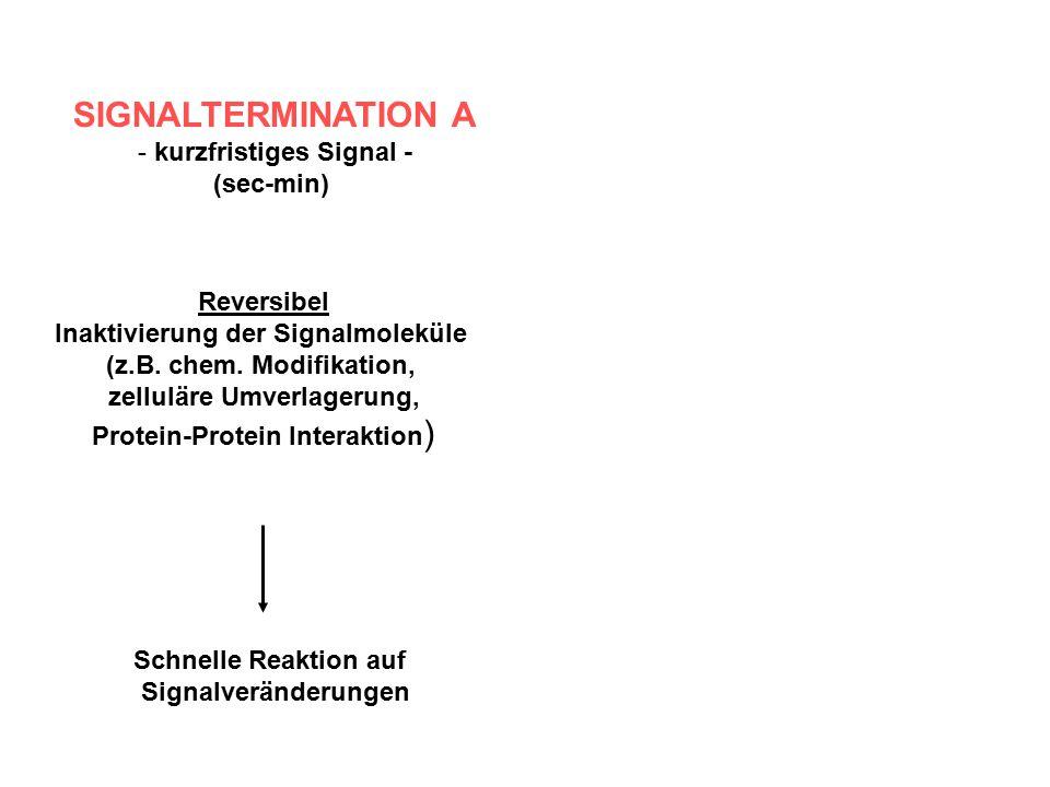 SIGNALTERMINATION A - kurzfristiges Signal - (sec-min) Reversibel Inaktivierung der Signalmoleküle (z.B. chem. Modifikation, zelluläre Umverlagerung,