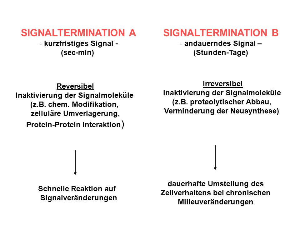 SIGNALTERMINATION bei G-Proteinen GTPase Activating Protein Regulators of G protein Signalling alle RGS-Proteine wirken als GAPs!!