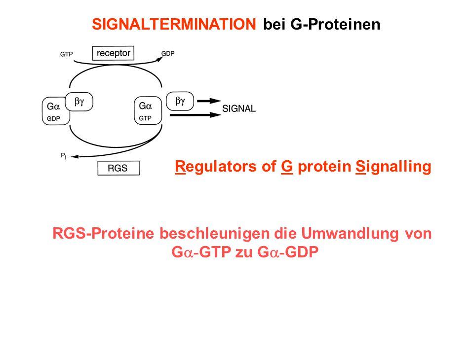 SIGNALTERMINATION bei G-Proteinen GTPase Activating Protein Regulators of G protein Signalling RGS-Proteine beschleunigen die Umwandlung von G  - GTP