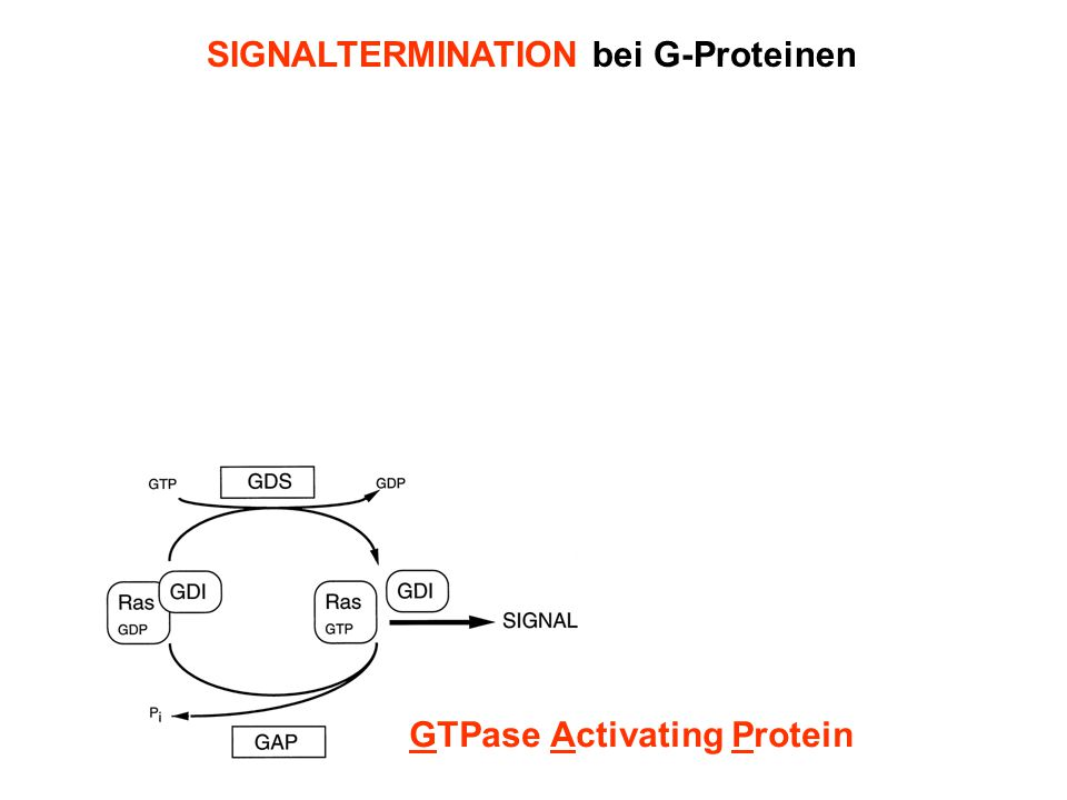 SIGNALTERMINATION bei G-Proteinen GTPase Activating Protein Regulators of G protein Signalling