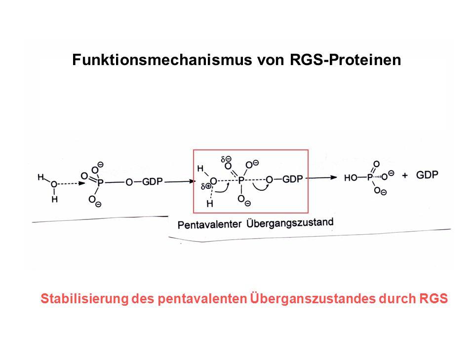 Funktionsmechanismus von RGS-Proteinen Stabilisierung des pentavalenten Überganszustandes durch RGS