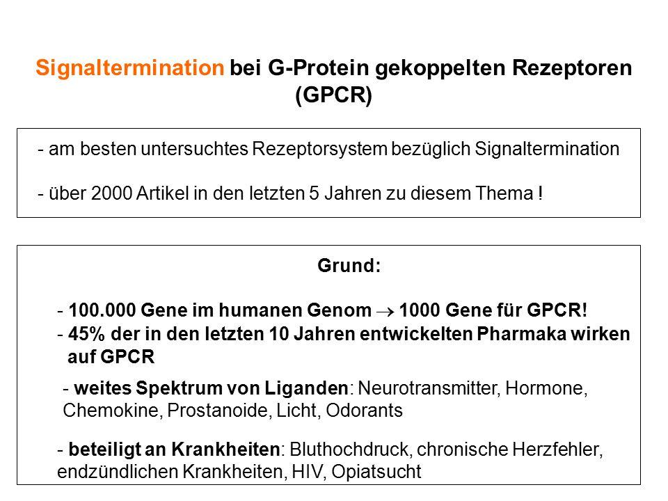 Signaltermination bei G-Protein gekoppelten Rezeptoren (GPCR) - am besten untersuchtes Rezeptorsystem bezüglich Signaltermination - über 2000 Artikel