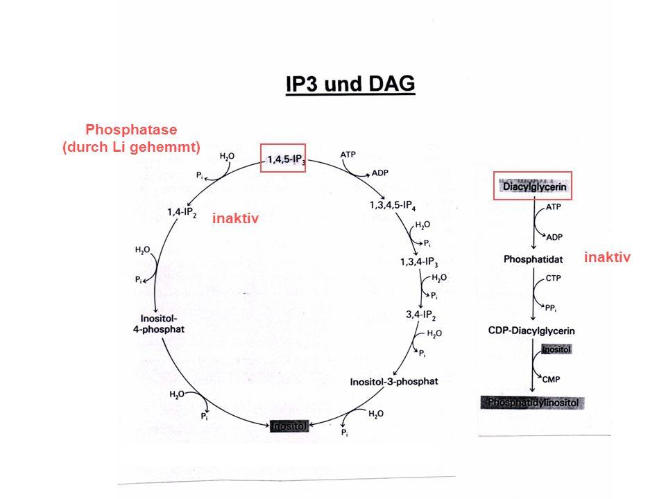 Phosphatase (durch Li gehemmt) inaktiv