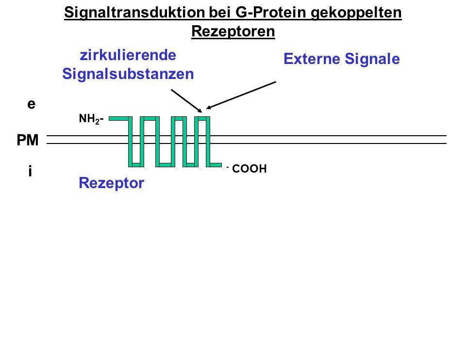 Signaltransduktion bei G-Protein gekoppelten Rezeptoren e i PM zirkulierende Signalsubstanzen NH 2 - - COOH Rezeptor Externe Signale
