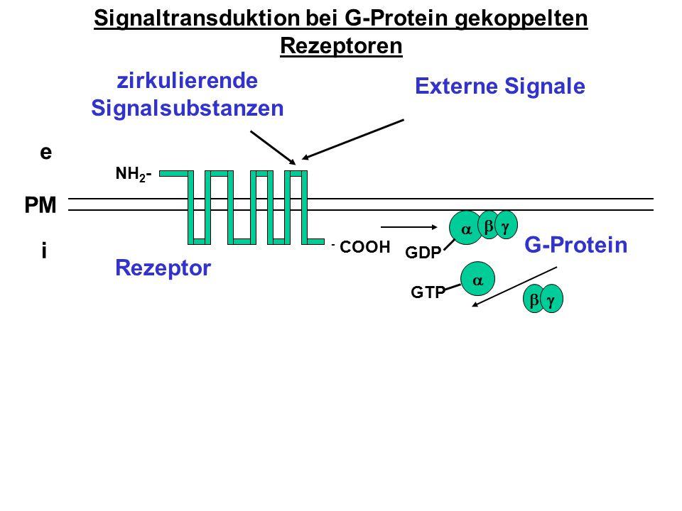 Signaltransduktion bei G-Protein gekoppelten Rezeptoren e i PM zirkulierende Signalsubstanzen NH 2 - - COOH   G-Protein Rezeptor  Externe Signale
