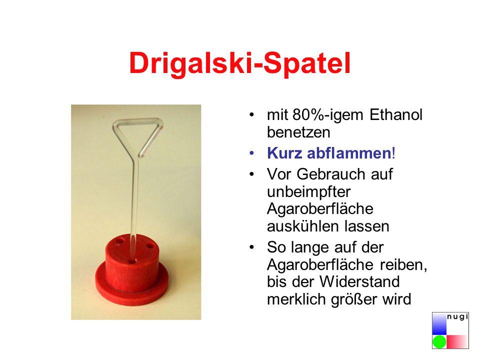 Drigalski-Spatel mit 80%-igem Ethanol benetzen Kurz abflammen! Vor Gebrauch auf unbeimpfter Agaroberfläche auskühlen lassen So lange auf der Agaroberf
