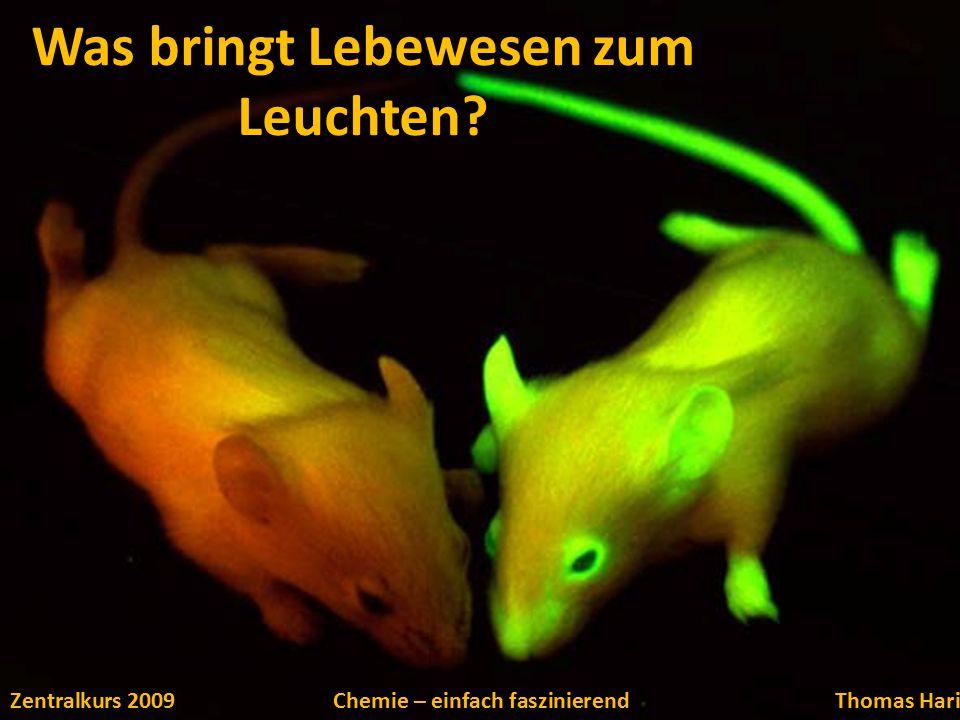 Was bringt Lebewesen zum Leuchten? Zentralkurs 2009Chemie – einfach faszinierendThomas Hari
