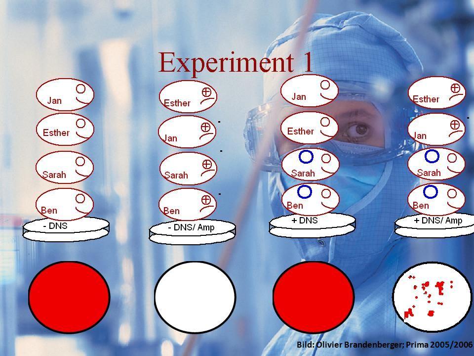 Resultate GFPExperimente/IdeeResultateKosten Bild: Olivier Brandenberger; Prima 2005/2006