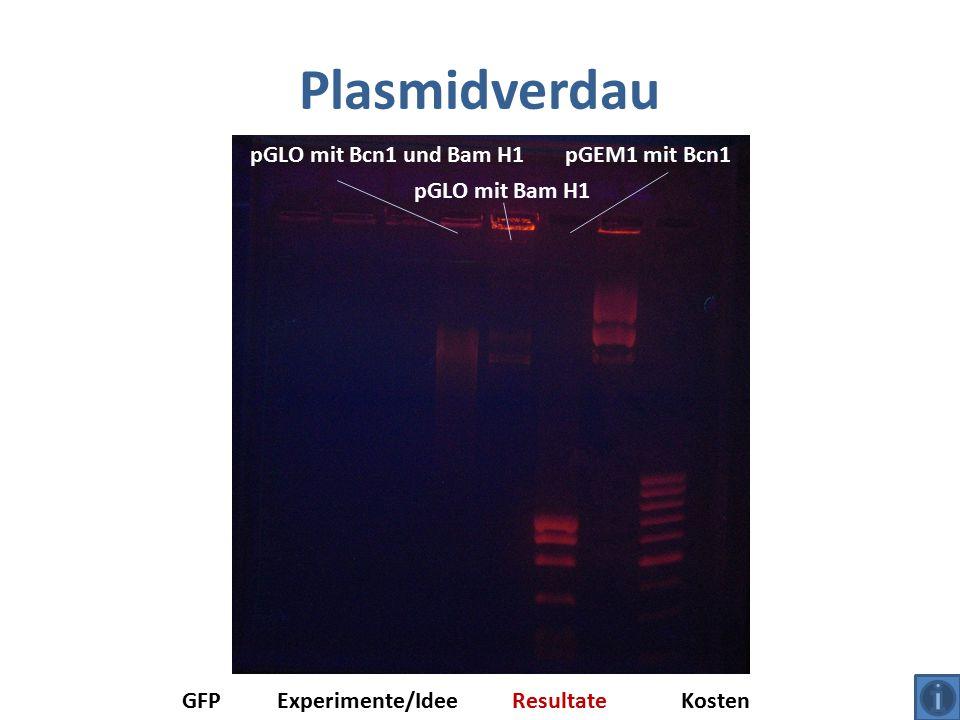 Plasmidverdau GFPExperimente/IdeeResultateKosten pGEM1 mit Bcn1pGLO mit Bcn1 und Bam H1 pGLO mit Bam H1