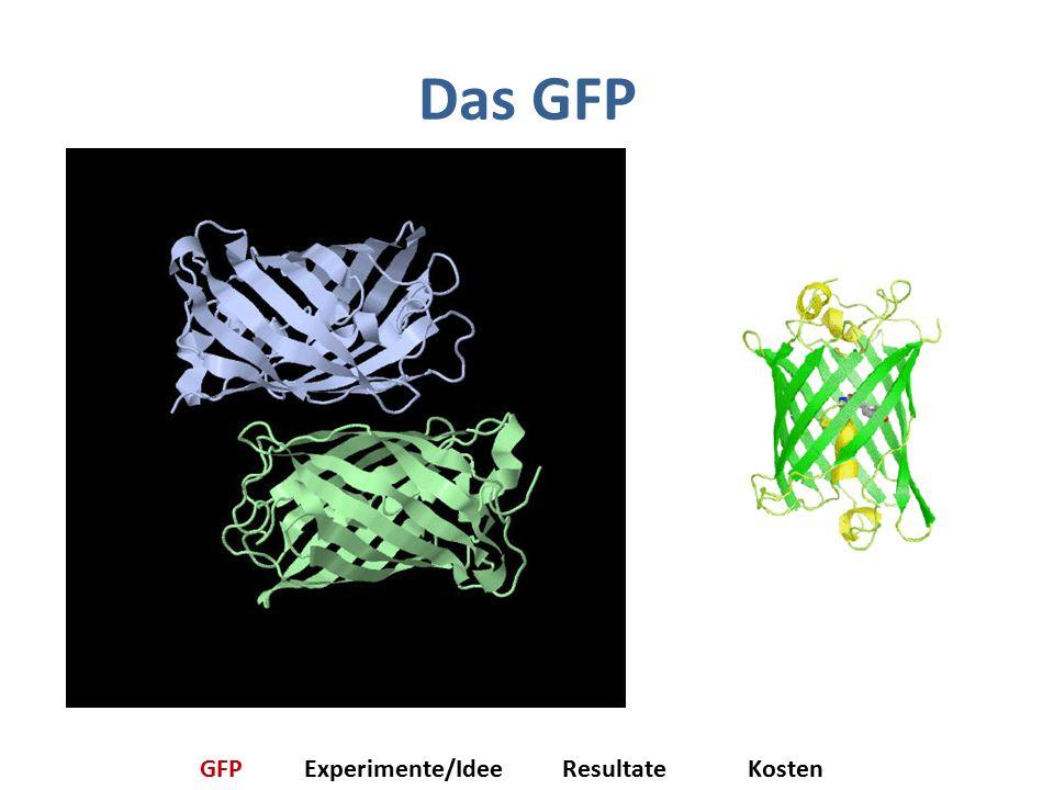 Das GFP GFPExperimente/IdeeResultateKosten