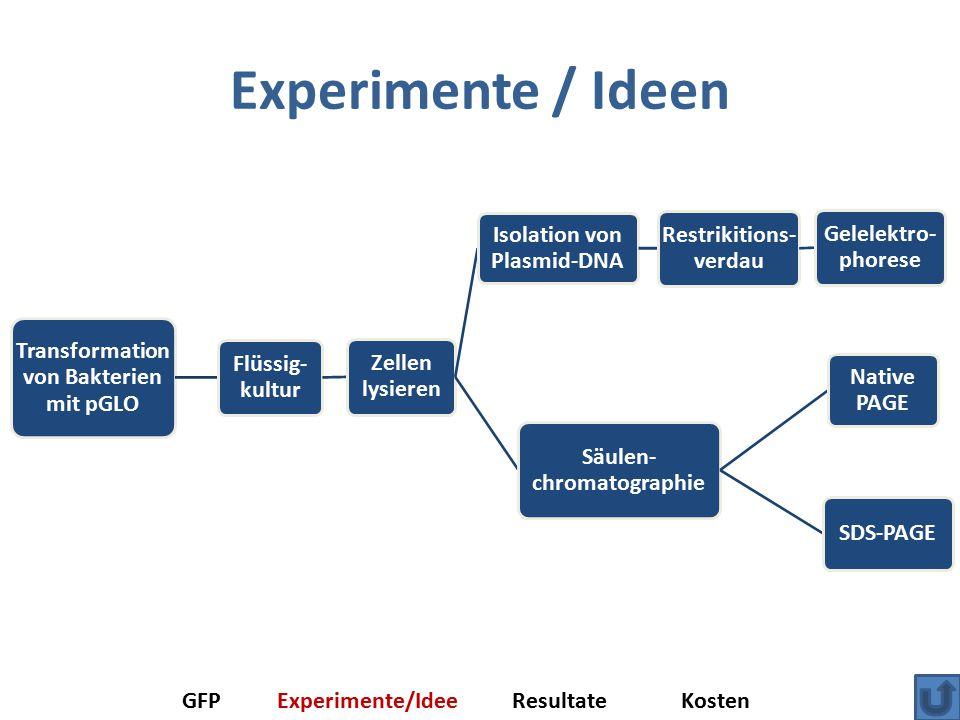 Experimente / Ideen Transformation von Bakterien mit pGLO Flüssig- kultur Zellen lysieren Isolation von Plasmid-DNA Restrikitions- verdau Gelelektro- phorese Säulen- chromatographie Native PAGE SDS-PAGE GFPExperimente/IdeeResultateKosten