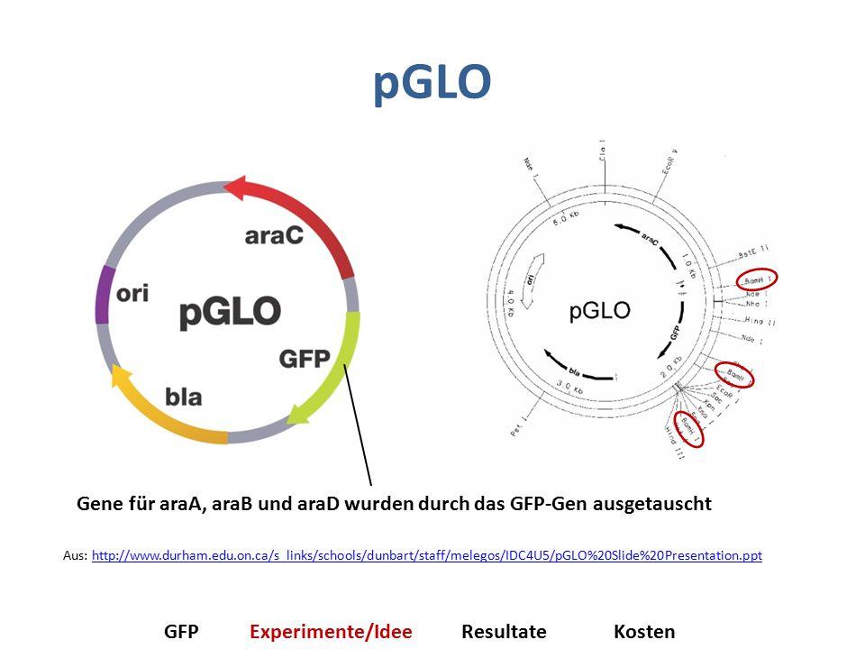 pGLO Gene für araA, araB und araD wurden durch das GFP-Gen ausgetauscht GFPExperimente/IdeeResultateKosten Aus: http://www.durham.edu.on.ca/s_links/schools/dunbart/staff/melegos/IDC4U5/pGLO%20Slide%20Presentation.ppthttp://www.durham.edu.on.ca/s_links/schools/dunbart/staff/melegos/IDC4U5/pGLO%20Slide%20Presentation.ppt