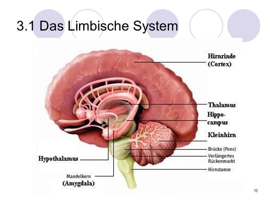 10 3.1 Das Limbische System