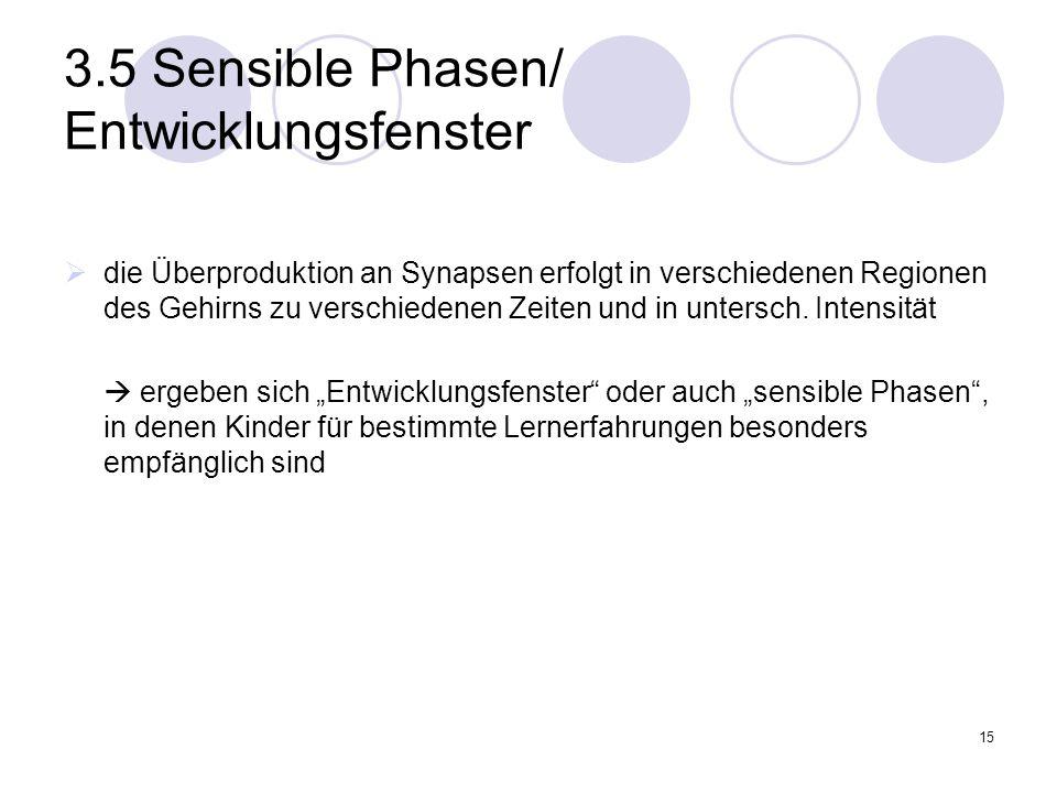 15 3.5 Sensible Phasen/ Entwicklungsfenster  die Überproduktion an Synapsen erfolgt in verschiedenen Regionen des Gehirns zu verschiedenen Zeiten und