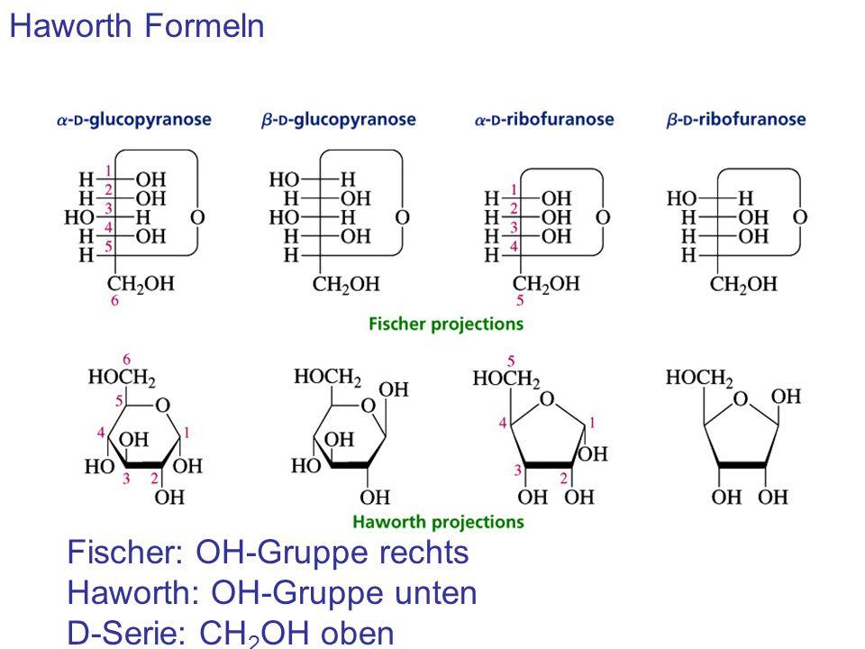 Haworth Formeln Fischer: OH-Gruppe rechts Haworth: OH-Gruppe unten D-Serie: CH 2 OH oben