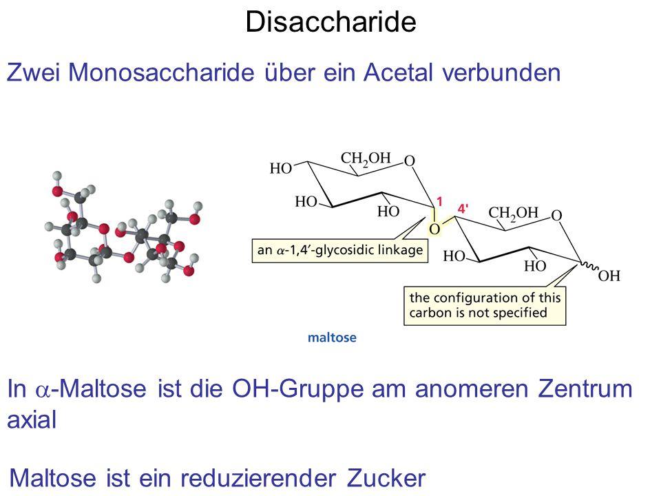 Disaccharide Zwei Monosaccharide über ein Acetal verbunden In  -Maltose ist die OH-Gruppe am anomeren Zentrum axial Maltose ist ein reduzierender Zucker