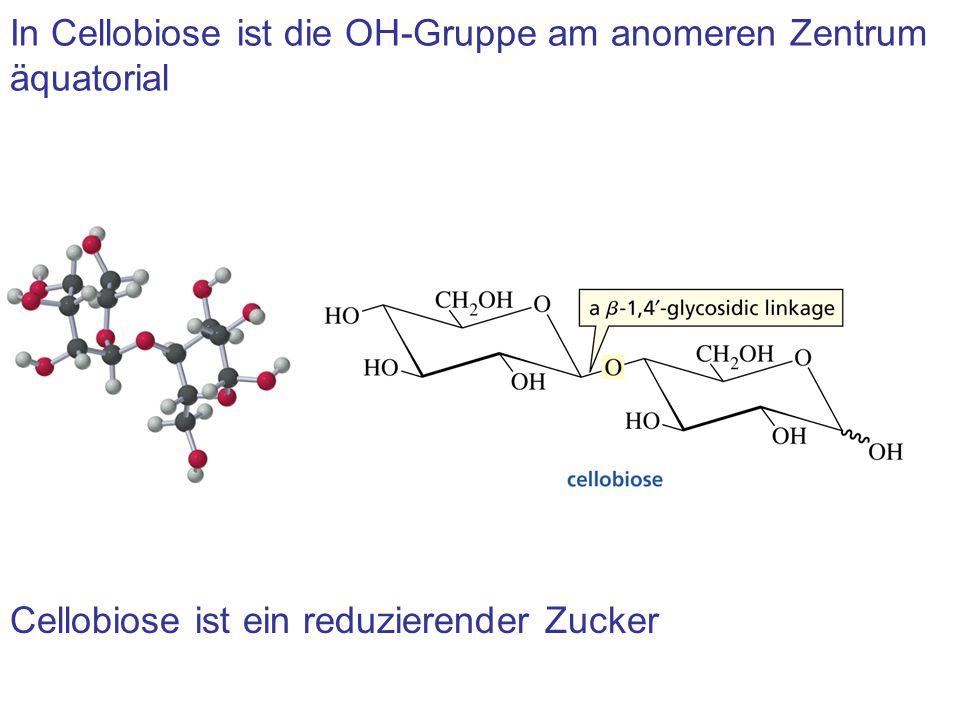In Cellobiose ist die OH-Gruppe am anomeren Zentrum äquatorial Cellobiose ist ein reduzierender Zucker