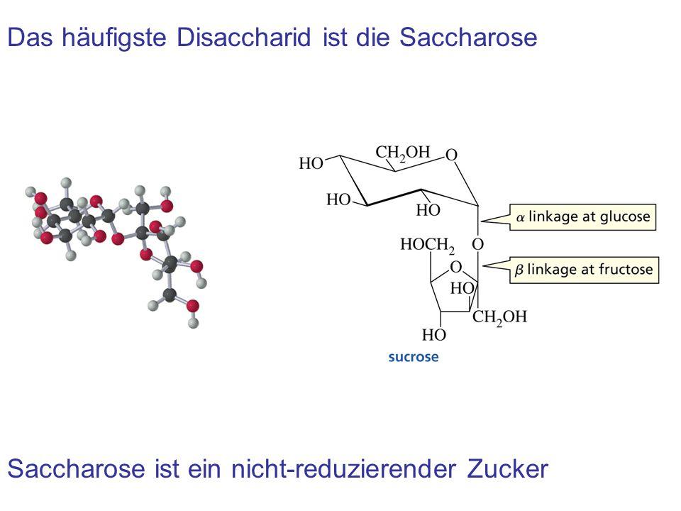 Das häufigste Disaccharid ist die Saccharose Saccharose ist ein nicht-reduzierender Zucker