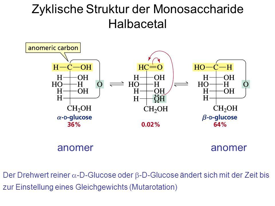 Zyklische Struktur der Monosaccharide Halbacetal anomer Der Drehwert reiner  -D-Glucose oder  -D-Glucose ändert sich mit der Zeit bis zur Einstellung eines Gleichgewichts (Mutarotation)