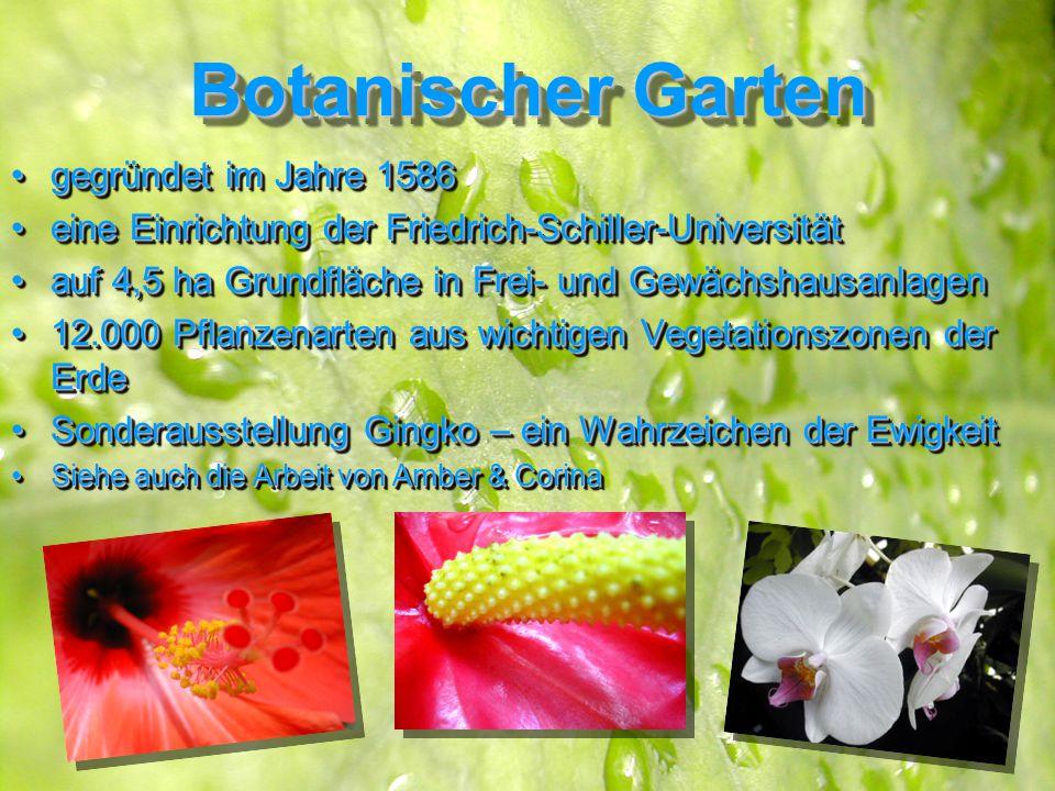 Botanischer Garten gegründet im Jahre 1586gegründet im Jahre 1586 eine Einrichtung der Friedrich-Schiller-Universitäteine Einrichtung der Friedrich-Schiller-Universität auf 4,5 ha Grundfläche in Frei- und Gewächshausanlagenauf 4,5 ha Grundfläche in Frei- und Gewächshausanlagen 12.000 Pflanzenarten aus wichtigen Vegetationszonen der Erde12.000 Pflanzenarten aus wichtigen Vegetationszonen der Erde Sonderausstellung Gingko – ein Wahrzeichen der EwigkeitSonderausstellung Gingko – ein Wahrzeichen der Ewigkeit Siehe auch die Arbeit von Amber & CorinaSiehe auch die Arbeit von Amber & Corina gegründet im Jahre 1586gegründet im Jahre 1586 eine Einrichtung der Friedrich-Schiller-Universitäteine Einrichtung der Friedrich-Schiller-Universität auf 4,5 ha Grundfläche in Frei- und Gewächshausanlagenauf 4,5 ha Grundfläche in Frei- und Gewächshausanlagen 12.000 Pflanzenarten aus wichtigen Vegetationszonen der Erde12.000 Pflanzenarten aus wichtigen Vegetationszonen der Erde Sonderausstellung Gingko – ein Wahrzeichen der EwigkeitSonderausstellung Gingko – ein Wahrzeichen der Ewigkeit Siehe auch die Arbeit von Amber & CorinaSiehe auch die Arbeit von Amber & Corina