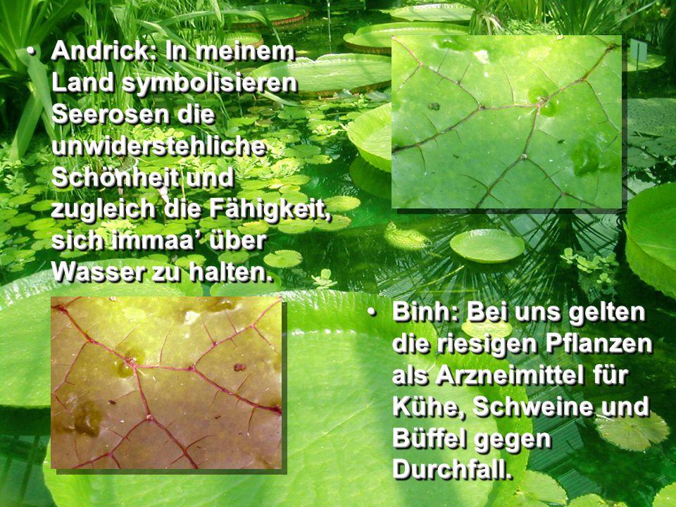 Andrick: In meinem Land symbolisieren Seerosen die unwiderstehliche Schönheit und zugleich die Fähigkeit, sich immaa' über Wasser zu halten.Andrick: In meinem Land symbolisieren Seerosen die unwiderstehliche Schönheit und zugleich die Fähigkeit, sich immaa' über Wasser zu halten.