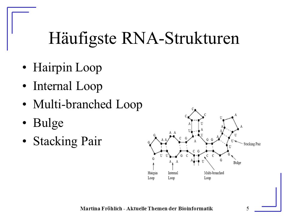 Martina Fröhlich - Aktuelle Themen der Bioinformatik5 Häufigste RNA-Strukturen Hairpin Loop Internal Loop Multi-branched Loop Bulge Stacking Pair