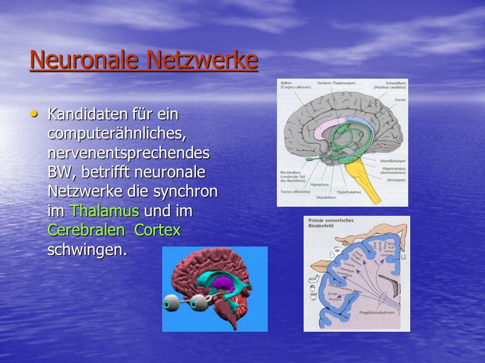 Neuronale Netzwerke Kandidaten für ein computerähnliches, nervenentsprechendes BW, betrifft neuronale Netzwerke die synchron im Thalamus und im Cerebralen Cortex schwingen.