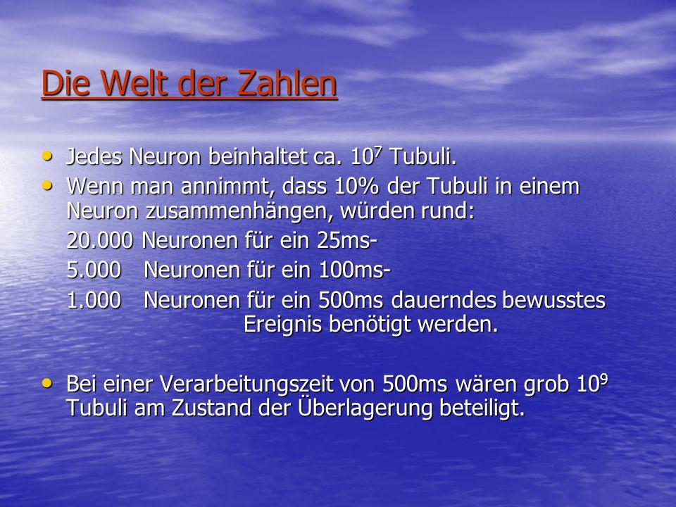 Die Welt der Zahlen Jedes Neuron beinhaltet ca.10 7 Tubuli.