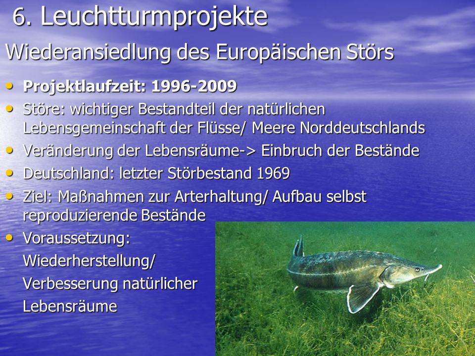 6. Leuchtturmprojekte 6. Leuchtturmprojekte Projektlaufzeit: 1996-2009 Projektlaufzeit: 1996-2009 Störe: wichtiger Bestandteil der natürlichen Lebensg