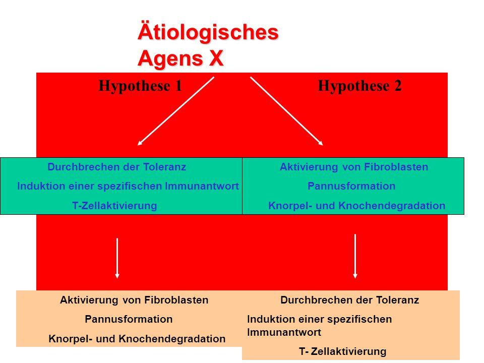 Hypothese 1 Hypothese 2 Ätiologisches Agens X Durchbrechen der Toleranz Induktion einer spezifischen Immunantwort T-Zellaktivierung Aktivierung von Fi