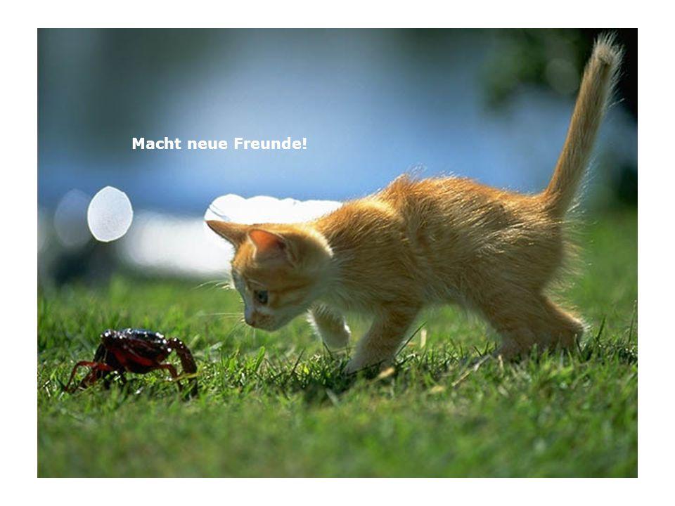 Macht neue Freunde!