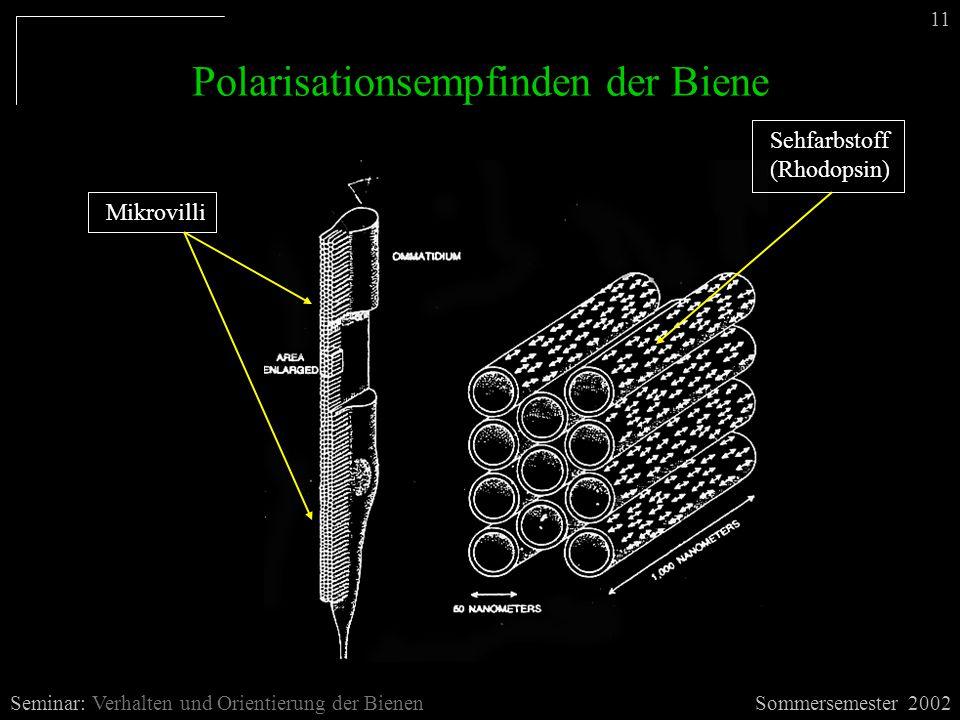 Sommersemester 2002Seminar: Verhalten und Orientierung der Bienen 11 Polarisationsempfinden der Biene Mikrovilli Sehfarbstoff (Rhodopsin)