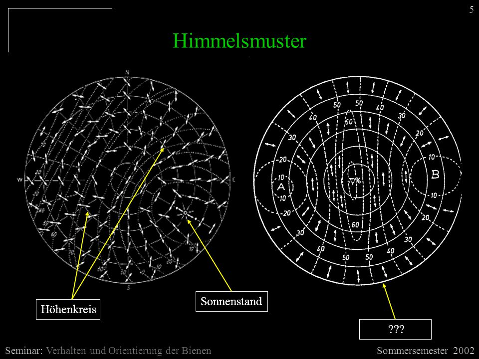 Seminar: Verhalten und Orientierung der Bienen 5 Himmelsmuster Sonnenstand Höhenkreis ???