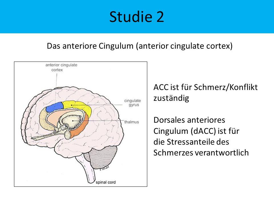Das anteriore Cingulum (anterior cingulate cortex) Studie 2 ACC ist für Schmerz/Konflikt zuständig Dorsales anteriores Cingulum (dACC) ist für die Stressanteile des Schmerzes verantwortlich