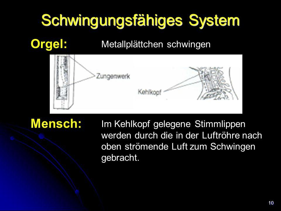 10 Schwingungsfähiges System Orgel: Mensch: Im Kehlkopf gelegene Stimmlippen werden durch die in der Luftröhre nach oben strömende Luft zum Schwingen
