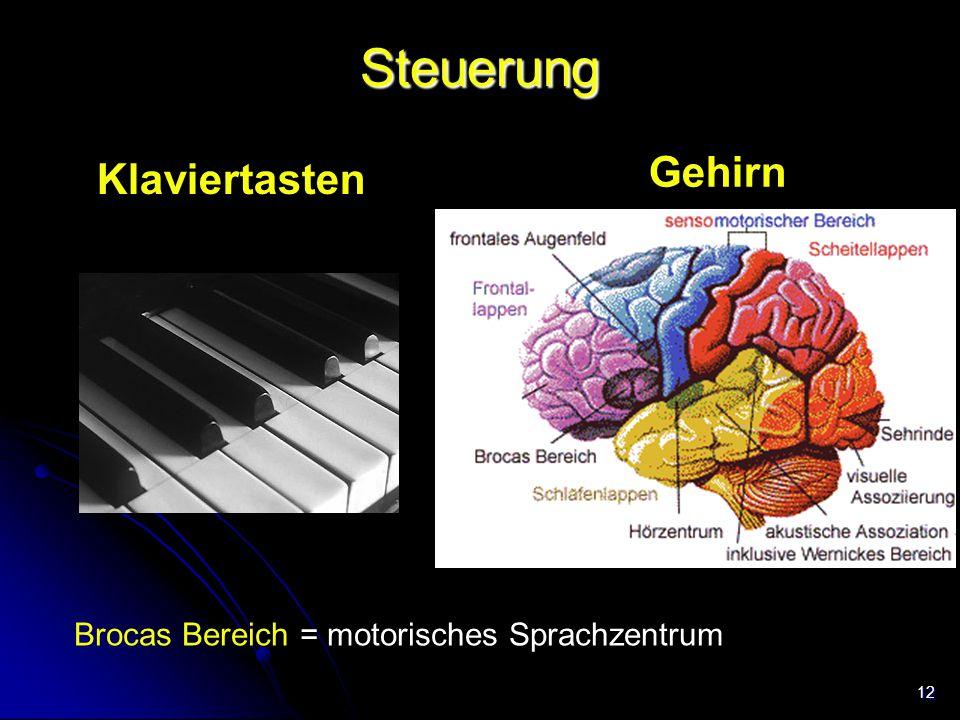 12 Steuerung Gehirn Klaviertasten Brocas Bereich = motorisches Sprachzentrum