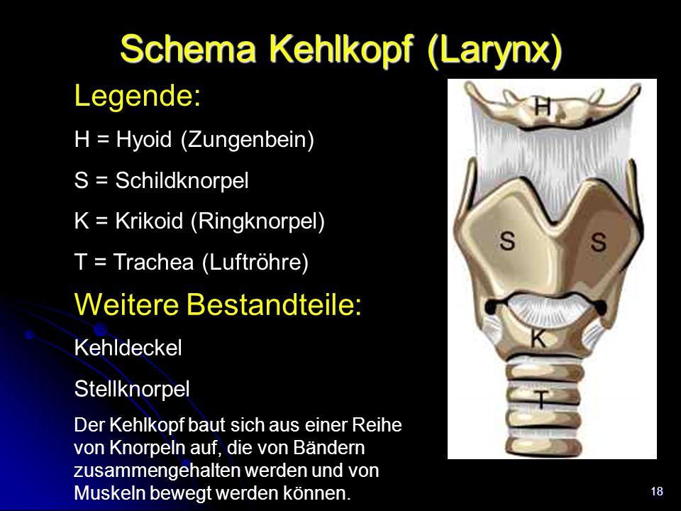 18 Schema Kehlkopf (Larynx) Legende: Trachea H = Hyoid (Zungenbein) S = Schildknorpel K = Krikoid (Ringknorpel) T = Trachea (Luftröhre) Weitere Bestan