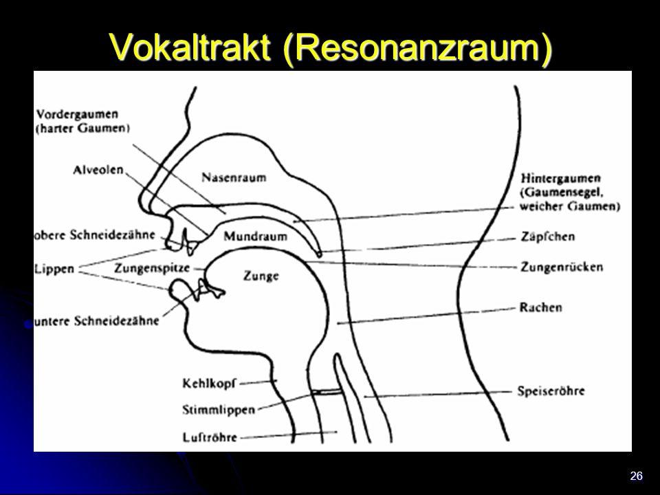 26 Vokaltrakt (Resonanzraum)
