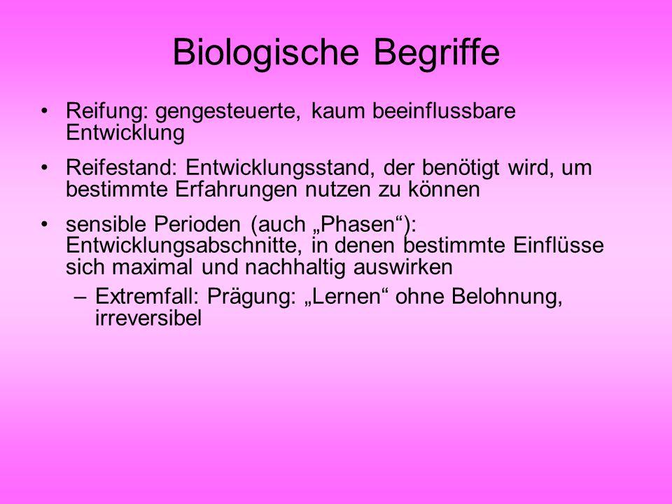 Biologische Begriffe Reifung: gengesteuerte, kaum beeinflussbare Entwicklung Reifestand: Entwicklungsstand, der benötigt wird, um bestimmte Erfahrunge