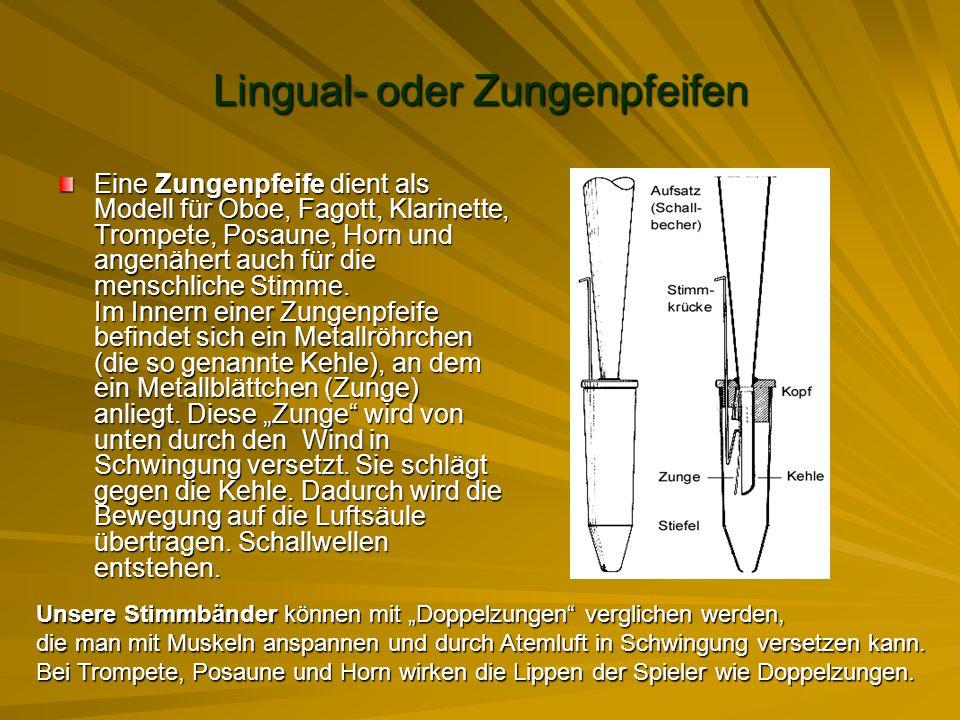 Lingual- oder Zungenpfeifen Eine Zungenpfeife dient als Modell für Oboe, Fagott, Klarinette, Trompete, Posaune, Horn und angenähert auch für die mensc