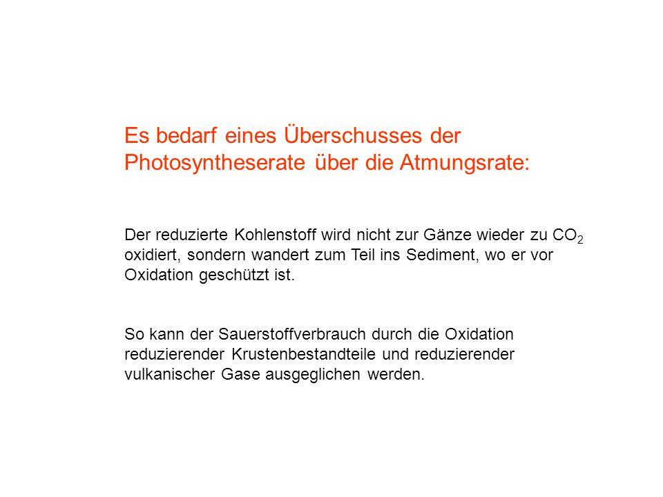 Es bedarf eines Überschusses der Photosyntheserate über die Atmungsrate: Der reduzierte Kohlenstoff wird nicht zur Gänze wieder zu CO 2 oxidiert, sond