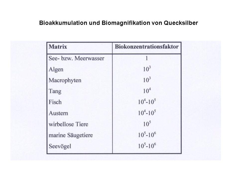 Bioakkumulation und Biomagnifikation von Quecksilber